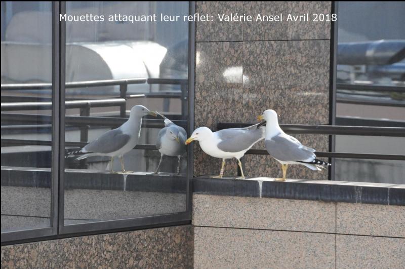 ValerieAnsel0418