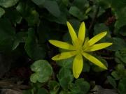 fleursvosges027
