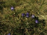 fleursvosges008