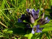 fleursvosges031