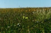 fleursvosges998