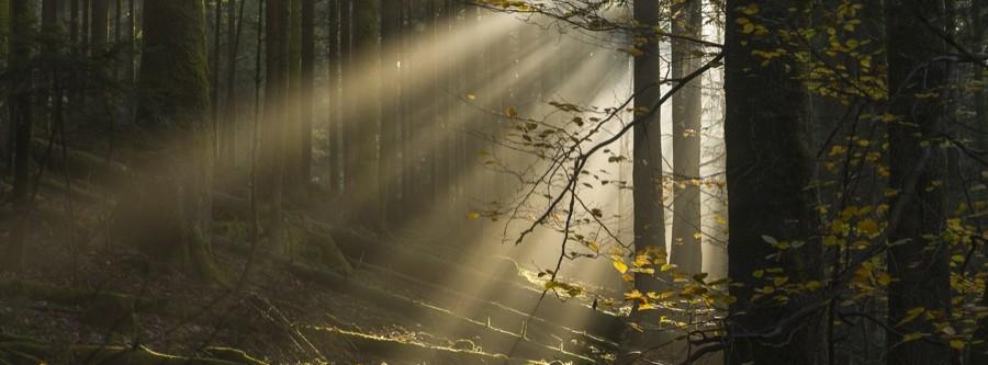 Soleil en forêt au lac de pierre percée