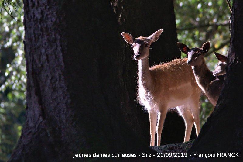 2019_10_Daines-Curieuses_Francois-FRANCK