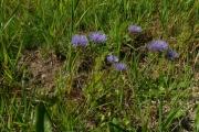 fleursvosges032